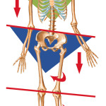 No, your pelvis is not out of place…